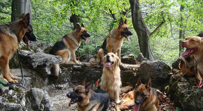 dogs' city park - l'area cani per i nostri amici a 4 zampe in