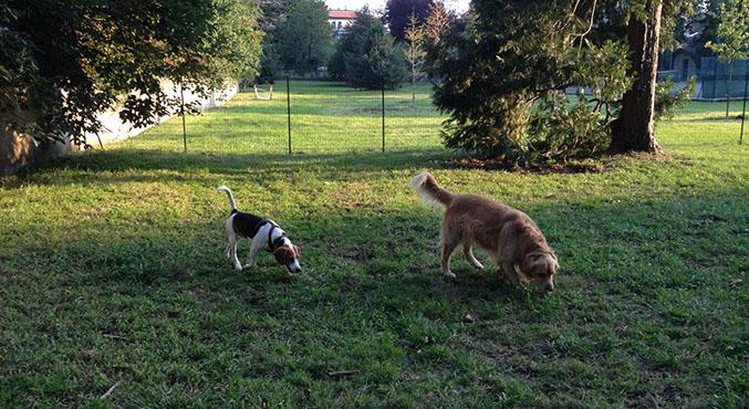 area cani - dogs' city park - l'area cani per i nostri amici a 4
